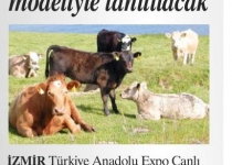 Livestock will be introduced with the US Pattern
